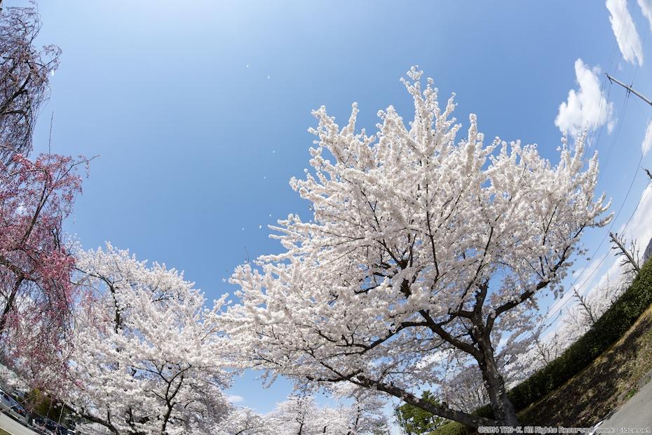 2014-04-19_12-25-52