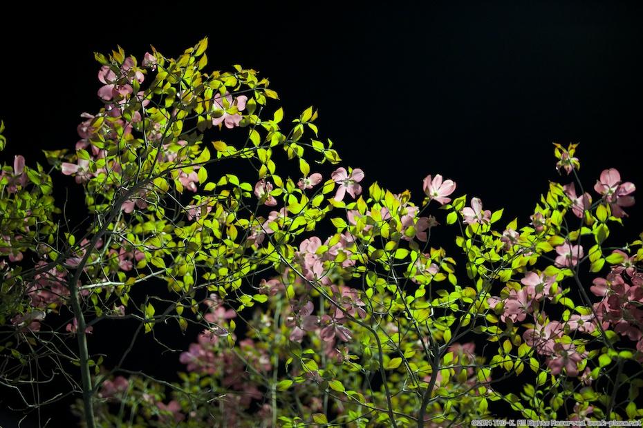 夜の街の街路樹